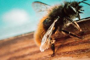 schmei t eine bienenparty zur rettung der bienen i m naturkosmetik berlin. Black Bedroom Furniture Sets. Home Design Ideas